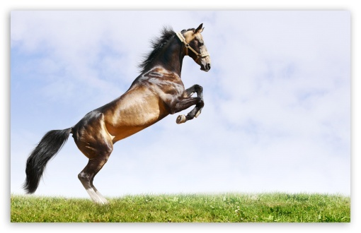 Horse On Hind Legs HD wallpaper for Wide 16:10 5:3 Widescreen WHXGA WQXGA WUXGA WXGA WGA ; HD 16:9 High Definition WQHD QWXGA 1080p 900p 720p QHD nHD ; Standard 4:3 5:4 3:2 Fullscreen UXGA XGA SVGA QSXGA SXGA DVGA HVGA HQVGA devices ( Apple PowerBook G4 iPhone 4 3G 3GS iPod Touch ) ; Tablet 1:1 ; iPad 1/2/Mini ; Mobile 4:3 5:3 3:2 16:9 5:4 - UXGA XGA SVGA WGA DVGA HVGA HQVGA devices ( Apple PowerBook G4 iPhone 4 3G 3GS iPod Touch ) WQHD QWXGA 1080p 900p 720p QHD nHD QSXGA SXGA ;