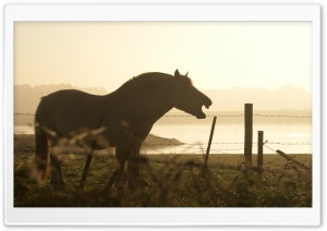 Horse Silhouette HD Wide Wallpaper for Widescreen