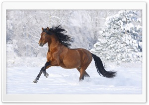 Horse, Winter Ultra HD Wallpaper for 4K UHD Widescreen desktop, tablet & smartphone
