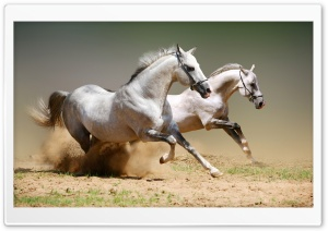 Horses HD Wide Wallpaper for Widescreen