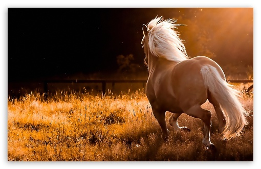 Horses ❤ 4K UHD Wallpaper for Wide 16:10 5:3 Widescreen WHXGA WQXGA WUXGA WXGA WGA ; 4K UHD 16:9 Ultra High Definition 2160p 1440p 1080p 900p 720p ; Standard 4:3 5:4 3:2 Fullscreen UXGA XGA SVGA QSXGA SXGA DVGA HVGA HQVGA ( Apple PowerBook G4 iPhone 4 3G 3GS iPod Touch ) ; Tablet 1:1 ; iPad 1/2/Mini ; Mobile 4:3 5:3 3:2 16:9 5:4 - UXGA XGA SVGA WGA DVGA HVGA HQVGA ( Apple PowerBook G4 iPhone 4 3G 3GS iPod Touch ) 2160p 1440p 1080p 900p 720p QSXGA SXGA ;