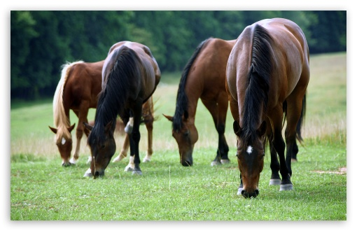 Horses HD wallpaper for Wide 16:10 5:3 Widescreen WHXGA WQXGA WUXGA WXGA WGA ; HD 16:9 High Definition WQHD QWXGA 1080p 900p 720p QHD nHD ; Standard 4:3 5:4 3:2 Fullscreen UXGA XGA SVGA QSXGA SXGA DVGA HVGA HQVGA devices ( Apple PowerBook G4 iPhone 4 3G 3GS iPod Touch ) ; iPad 1/2/Mini ; Mobile 4:3 5:3 3:2 16:9 5:4 - UXGA XGA SVGA WGA DVGA HVGA HQVGA devices ( Apple PowerBook G4 iPhone 4 3G 3GS iPod Touch ) WQHD QWXGA 1080p 900p 720p QHD nHD QSXGA SXGA ;