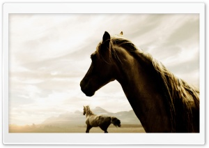 Horses HD Wide Wallpaper for 4K UHD Widescreen desktop & smartphone