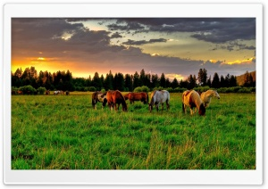 Horses Grazing In A Field Ultra HD Wallpaper for 4K UHD Widescreen desktop, tablet & smartphone