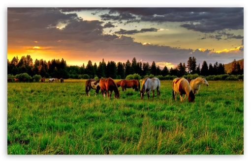 Horses Grazing In A Field HD wallpaper for Wide 16:10 5:3 Widescreen WHXGA WQXGA WUXGA WXGA WGA ; HD 16:9 High Definition WQHD QWXGA 1080p 900p 720p QHD nHD ; Standard 4:3 5:4 3:2 Fullscreen UXGA XGA SVGA QSXGA SXGA DVGA HVGA HQVGA devices ( Apple PowerBook G4 iPhone 4 3G 3GS iPod Touch ) ; Tablet 1:1 ; iPad 1/2/Mini ; Mobile 4:3 5:3 3:2 16:9 5:4 - UXGA XGA SVGA WGA DVGA HVGA HQVGA devices ( Apple PowerBook G4 iPhone 4 3G 3GS iPod Touch ) WQHD QWXGA 1080p 900p 720p QHD nHD QSXGA SXGA ; Dual 16:10 5:3 16:9 4:3 5:4 WHXGA WQXGA WUXGA WXGA WGA WQHD QWXGA 1080p 900p 720p QHD nHD UXGA XGA SVGA QSXGA SXGA ;