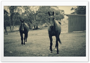 Horses Modern Vintage Photography HD Wide Wallpaper for Widescreen