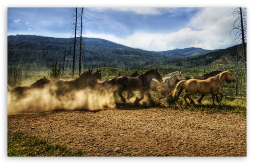 Horses Running HD wallpaper for Wide 16:10 5:3 Widescreen WHXGA WQXGA WUXGA WXGA WGA ; HD 16:9 High Definition WQHD QWXGA 1080p 900p 720p QHD nHD ; Standard 4:3 5:4 3:2 Fullscreen UXGA XGA SVGA QSXGA SXGA DVGA HVGA HQVGA devices ( Apple PowerBook G4 iPhone 4 3G 3GS iPod Touch ) ; Tablet 1:1 ; iPad 1/2/Mini ; Mobile 4:3 5:3 3:2 16:9 5:4 - UXGA XGA SVGA WGA DVGA HVGA HQVGA devices ( Apple PowerBook G4 iPhone 4 3G 3GS iPod Touch ) WQHD QWXGA 1080p 900p 720p QHD nHD QSXGA SXGA ; Dual 16:10 5:3 16:9 4:3 5:4 WHXGA WQXGA WUXGA WXGA WGA WQHD QWXGA 1080p 900p 720p QHD nHD UXGA XGA SVGA QSXGA SXGA ;
