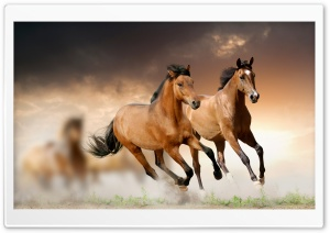 Horses Running HD Wide Wallpaper for 4K UHD Widescreen desktop & smartphone