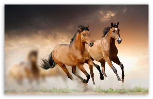 Horses Running HD wallpaper for Wide 16:10 5:3 Widescreen WHXGA WQXGA WUXGA WXGA WGA ; HD 16:9 High Definition WQHD QWXGA 1080p 900p 720p QHD nHD ; UHD 16:9 WQHD QWXGA 1080p 900p 720p QHD nHD ; Standard 4:3 5:4 3:2 Fullscreen UXGA XGA SVGA QSXGA SXGA DVGA HVGA HQVGA devices ( Apple PowerBook G4 iPhone 4 3G 3GS iPod Touch ) ; Tablet 1:1 ; iPad 1/2/Mini ; Mobile 4:3 5:3 3:2 16:9 5:4 - UXGA XGA SVGA WGA DVGA HVGA HQVGA devices ( Apple PowerBook G4 iPhone 4 3G 3GS iPod Touch ) WQHD QWXGA 1080p 900p 720p QHD nHD QSXGA SXGA ;