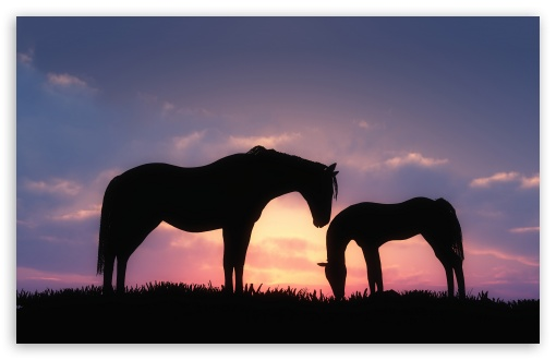 Horses Sunset Silhouette ❤ 4K UHD Wallpaper for Wide 16:10 5:3 Widescreen WHXGA WQXGA WUXGA WXGA WGA ; 4K UHD 16:9 Ultra High Definition 2160p 1440p 1080p 900p 720p ; Standard 4:3 5:4 3:2 Fullscreen UXGA XGA SVGA QSXGA SXGA DVGA HVGA HQVGA ( Apple PowerBook G4 iPhone 4 3G 3GS iPod Touch ) ; iPad 1/2/Mini ; Mobile 4:3 5:3 3:2 16:9 5:4 - UXGA XGA SVGA WGA DVGA HVGA HQVGA ( Apple PowerBook G4 iPhone 4 3G 3GS iPod Touch ) 2160p 1440p 1080p 900p 720p QSXGA SXGA ; Dual 5:4 QSXGA SXGA ;