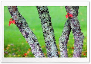 Hosting Lichens HD Wide Wallpaper for Widescreen