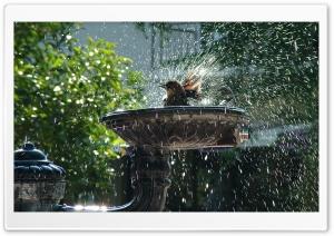 Hot Days Of Summer HD Wide Wallpaper for 4K UHD Widescreen desktop & smartphone