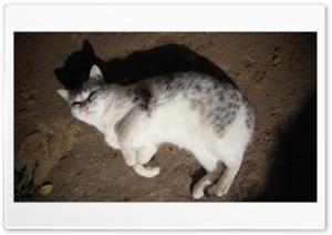 House Cat Ultra HD Wallpaper for 4K UHD Widescreen desktop, tablet & smartphone