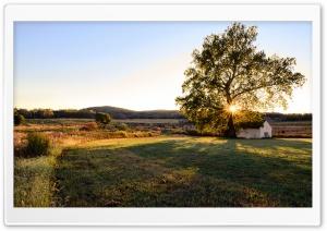 House, Tree, Landscape Ultra HD Wallpaper for 4K UHD Widescreen desktop, tablet & smartphone