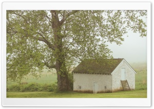 House, Tree, Mist Ultra HD Wallpaper for 4K UHD Widescreen desktop, tablet & smartphone