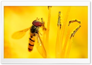 Hoverflies HD Wide Wallpaper for Widescreen