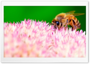 How Bees Make Honey HD Wide Wallpaper for Widescreen