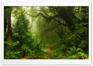 Humid Tropical Path HD Wide Wallpaper for Widescreen
