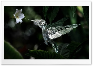 Humming Bird Made From Watch Parts HD Wide Wallpaper for Widescreen