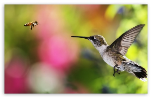 HUMMINGBIRD AND BEE - CHILE HD wallpaper for Wide 16:10 5:3 Widescreen WHXGA WQXGA WUXGA WXGA WGA ; HD 16:9 High Definition WQHD QWXGA 1080p 900p 720p QHD nHD ; Standard 3:2 Fullscreen DVGA HVGA HQVGA devices ( Apple PowerBook G4 iPhone 4 3G 3GS iPod Touch ) ; Tablet 1:1 ; Mobile 5:3 3:2 16:9 - WGA DVGA HVGA HQVGA devices ( Apple PowerBook G4 iPhone 4 3G 3GS iPod Touch ) WQHD QWXGA 1080p 900p 720p QHD nHD ;