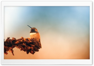 Hummingbird, Autumn HD Wide Wallpaper for Widescreen