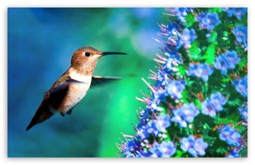 Hummingbird in Flight ❤ 4K UHD Wallpaper for Wide 16:10 5:3 Widescreen WHXGA WQXGA WUXGA WXGA WGA ; UltraWide 21:9 ; 4K UHD 16:9 Ultra High Definition 2160p 1440p 1080p 900p 720p ; Standard 4:3 5:4 3:2 Fullscreen UXGA XGA SVGA QSXGA SXGA DVGA HVGA HQVGA ( Apple PowerBook G4 iPhone 4 3G 3GS iPod Touch ) ; Smartphone 3:2 5:3 DVGA HVGA HQVGA ( Apple PowerBook G4 iPhone 4 3G 3GS iPod Touch ) WGA ; Tablet 1:1 ; iPad 1/2/Mini ; Mobile 4:3 5:3 3:2 16:9 5:4 - UXGA XGA SVGA WGA DVGA HVGA HQVGA ( Apple PowerBook G4 iPhone 4 3G 3GS iPod Touch ) 2160p 1440p 1080p 900p 720p QSXGA SXGA ; Dual 16:10 4:3 5:4 WHXGA WQXGA WUXGA WXGA UXGA XGA SVGA QSXGA SXGA ;