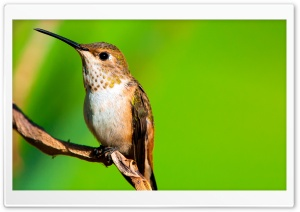 Hummingbird Macro Photography HD Wide Wallpaper for Widescreen