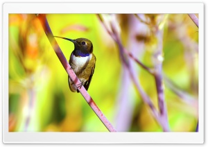 Hummingbird Photography HD Wide Wallpaper for Widescreen
