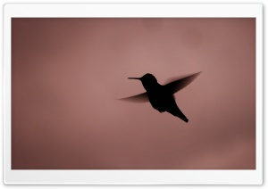 Hummingbird Silhouette HD Wide Wallpaper for Widescreen