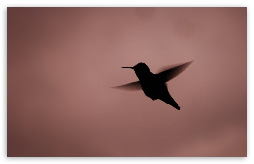 Hummingbird Silhouette HD wallpaper for Wide 16:10 5:3 Widescreen WHXGA WQXGA WUXGA WXGA WGA ; HD 16:9 High Definition WQHD QWXGA 1080p 900p 720p QHD nHD ; UHD 16:9 WQHD QWXGA 1080p 900p 720p QHD nHD ; Standard 4:3 5:4 3:2 Fullscreen UXGA XGA SVGA QSXGA SXGA DVGA HVGA HQVGA devices ( Apple PowerBook G4 iPhone 4 3G 3GS iPod Touch ) ; Tablet 1:1 ; iPad 1/2/Mini ; Mobile 4:3 5:3 3:2 16:9 5:4 - UXGA XGA SVGA WGA DVGA HVGA HQVGA devices ( Apple PowerBook G4 iPhone 4 3G 3GS iPod Touch ) WQHD QWXGA 1080p 900p 720p QHD nHD QSXGA SXGA ; Dual 16:10 5:3 16:9 4:3 5:4 WHXGA WQXGA WUXGA WXGA WGA WQHD QWXGA 1080p 900p 720p QHD nHD UXGA XGA SVGA QSXGA SXGA ;