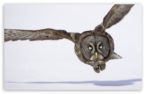 Hunting Great Gray Owl HD wallpaper for Wide 16:10 5:3 Widescreen WHXGA WQXGA WUXGA WXGA WGA ; HD 16:9 High Definition WQHD QWXGA 1080p 900p 720p QHD nHD ; Standard 4:3 5:4 3:2 Fullscreen UXGA XGA SVGA QSXGA SXGA DVGA HVGA HQVGA devices ( Apple PowerBook G4 iPhone 4 3G 3GS iPod Touch ) ; iPad 1/2/Mini ; Mobile 4:3 5:3 3:2 16:9 5:4 - UXGA XGA SVGA WGA DVGA HVGA HQVGA devices ( Apple PowerBook G4 iPhone 4 3G 3GS iPod Touch ) WQHD QWXGA 1080p 900p 720p QHD nHD QSXGA SXGA ;