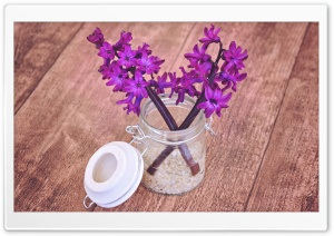 Hyacinths, Wood Background HD Wide Wallpaper for Widescreen