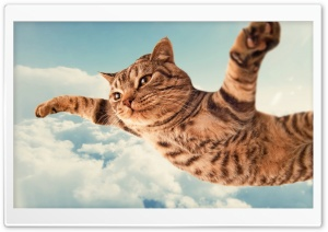 I Belive I Can Fly HD Wide Wallpaper for Widescreen