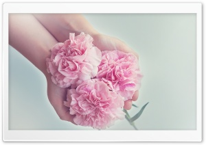 I Give You Flowers HD Wide Wallpaper for Widescreen