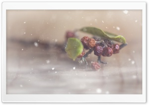 Ice Berries HD Wide Wallpaper for Widescreen