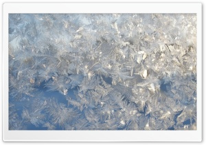 Ice Flowers On A Window HD Wide Wallpaper for Widescreen