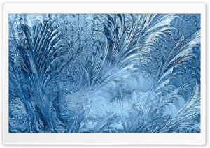 Ice Flowers On The Window HD Wide Wallpaper for Widescreen