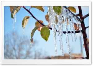 Ice On Tree HD Wide Wallpaper for Widescreen