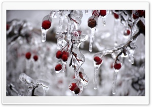 Iced Berries HD Wide Wallpaper for Widescreen