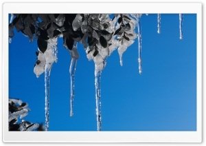 Icicles HD Wide Wallpaper for 4K UHD Widescreen desktop & smartphone