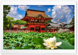 Iga Hachiman Shrine And Lotuses HD Wide Wallpaper for 4K UHD Widescreen desktop & smartphone