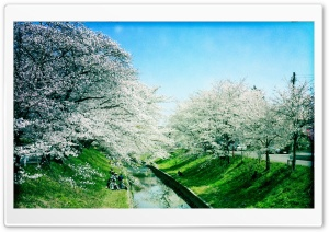 Iga River, Spring HD Wide Wallpaper for Widescreen