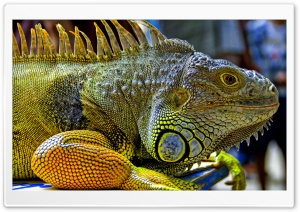 Iguana In Malaysia HD Wide Wallpaper for Widescreen