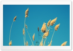 In A Blue Sky HD Wide Wallpaper for Widescreen