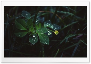 In The Rain HD Wide Wallpaper for Widescreen