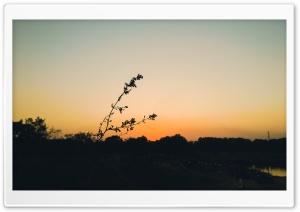 In the sunset Ultra HD Wallpaper for 4K UHD Widescreen desktop, tablet & smartphone