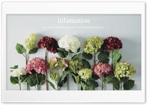 Infatuation Ultra HD Wallpaper for 4K UHD Widescreen desktop, tablet & smartphone