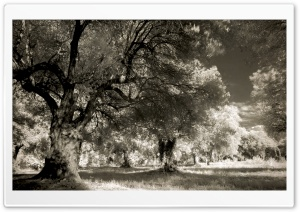 Infrared Italian Landscape HD Wide Wallpaper for 4K UHD Widescreen desktop & smartphone