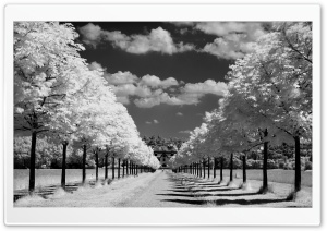 Infrared Photo HD Wide Wallpaper for Widescreen