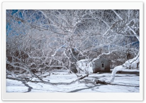 Infrared Winter Ultra HD Wallpaper for 4K UHD Widescreen desktop, tablet & smartphone
